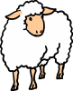 Woolly the sheep (color)